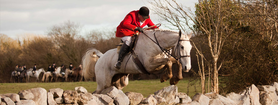 Irish Sporting and Hunt Horses