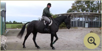 Hunting Horse Breeders Ireland